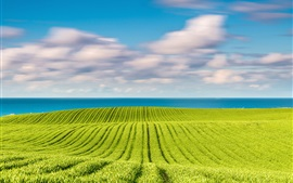 Baltic sea, spring in May, green fields