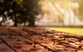 Bench, leaves, autumn