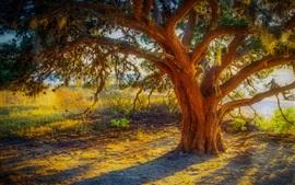 Grande árvore, tronco, grama, rio, raios de sol