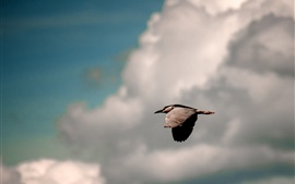 Preview wallpaper Bird flight, sky, clouds