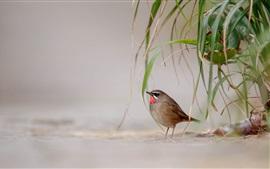 壁紙のプレビュー 鳥、地面、草