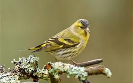 Bird look, tree branch