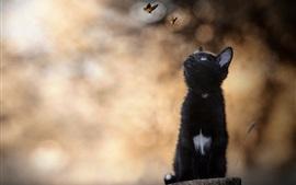 Черный котенок смотрит на бабочку, пень
