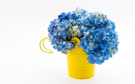 Preview wallpaper Blue hydrangea, bouquet, yellow bucket, white background