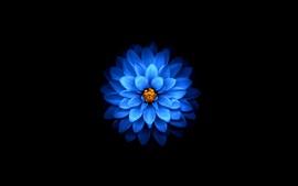 Aperçu fond d'écran Fleur de pétales bleus, fond noir