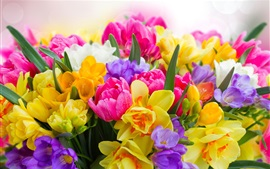 Colorful flowers, daffodils, tulips, freesia