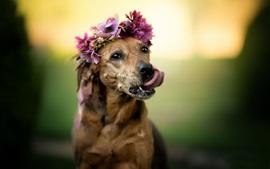 Cão marrom bonito, cara, flores