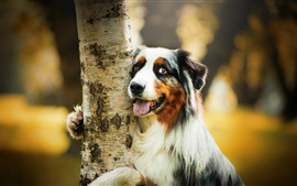 Preview wallpaper Cute dog hug a tree
