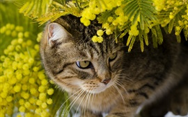 Cute kitten hidden in the flowers