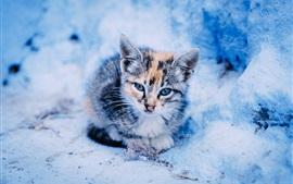 Vorschau des Hintergrundbilder Nettes Kätzchen im Schnee, Winter