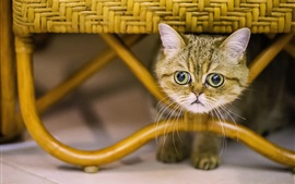 Cute kitten under chair, face