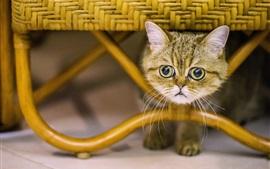 Preview wallpaper Cute kitten under chair, face