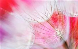 Aperçu fond d'écran Pissenlit, plante macrophotographie