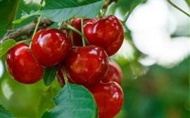 壁紙のプレビュー おいしい赤いチェリー、熟したフルーツ、葉
