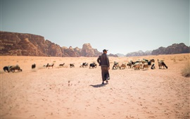 Deserto, cabras, grama, pessoa