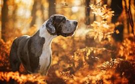 Cachorro, outono, árvores