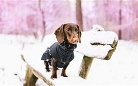 Cachorro, banco, neve, inverno