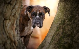 Dog front view, face, tree