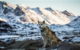 Cachorro, montanhas, neve, inverno