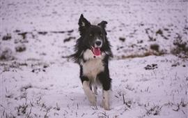 Perro caminar en la nieve, invierno