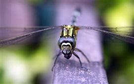 Aperçu fond d'écran Vue de face de libellule, bois