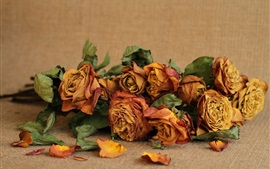 Preview wallpaper Dry roses, flowers, still life