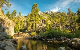 Eagle Creek, trees, stones, USA