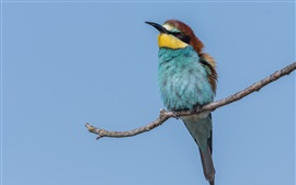 European bee-eater, blue sky