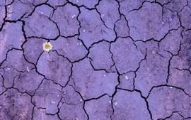Flor, tierra, suelo, crack