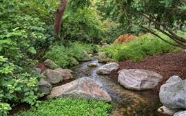 Aperçu fond d'écran Forêt, ruisseau, pierres, arbres, vert