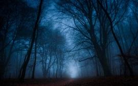 Forêt, arbres, brouillard, chemin, crépuscule