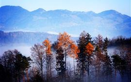 Bosque, árboles, montañas, niebla, mañana, otoño