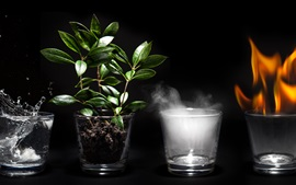 Four glass cups, fire, steam, plants, water