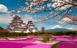 Fuji Mount, Japan, temple, sakura bloom