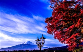 Fuji Mount, lamp, trees, autumn