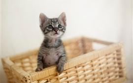 壁紙のプレビュー 毛皮の子猫、バスケット