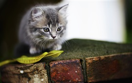 Preview wallpaper Furry kitten, leaf, bricks