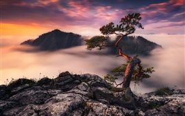 Germany, tree, morning, fog, mountains top