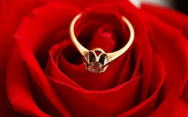 Preview wallpaper Gold ring, diamond, red rose