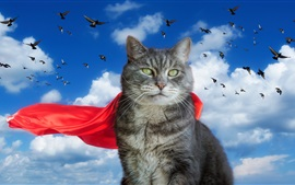 Gray cat, red cloak, pigeons, sky