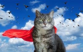 Серый кот, красный плащ, голуби, небо