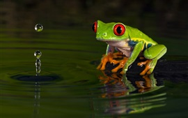 Preview wallpaper Green frog, water, wave