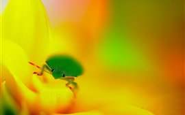Green insect, yellow flower
