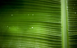 Preview wallpaper Green leaf macro photography, water drops, texture