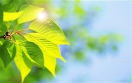 Folhas verdes, brilho, natureza