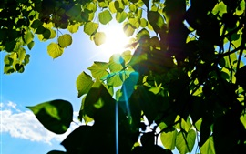 Preview wallpaper Green leaves, tree, blue sky, sun rays