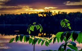 Preview wallpaper Green leaves, twigs, river, dusk