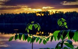 Hojas verdes, ramitas, río, anochecer