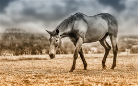Preview wallpaper Horse, grass, pasture