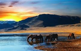 Los caballos beben agua, lago, montañas, puesta de sol